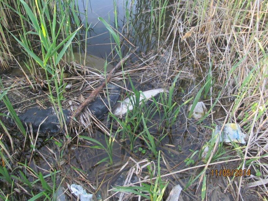 В Володарском районе в ставке  погибла рыба (ФОТО), фото-1