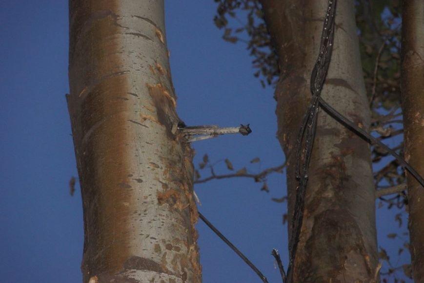 Эхо вчерашней войны! Мариупольцы обнаружили в дереве... гранату (Фотофакт), фото-2