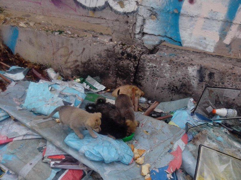 В Николаеве выбросили на свалку щенков: в соцсети ищут им «ласковые руки» (ФОТО, ВИДЕО), фото-1