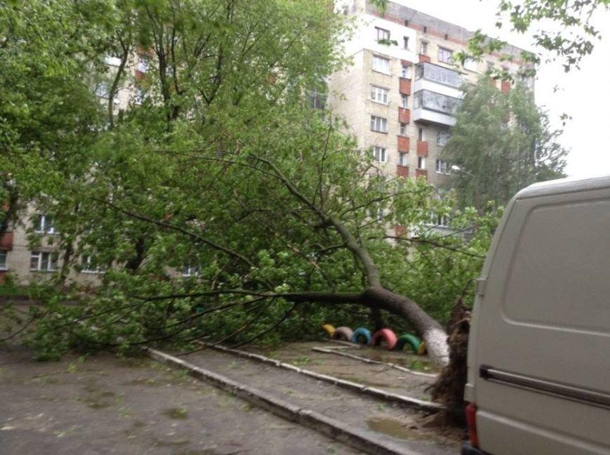 Погода наробила лиха: у Львові буря повалила дерево на дитячий майданчик (ФОТО), фото-3