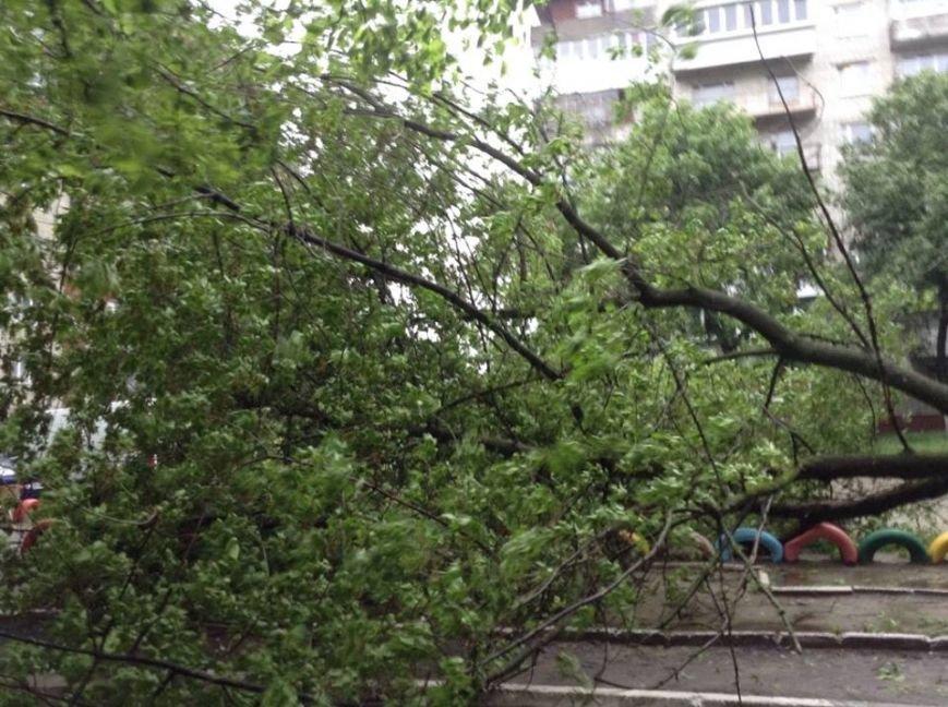 Погода наробила лиха: у Львові буря повалила дерево на дитячий майданчик (ФОТО), фото-5