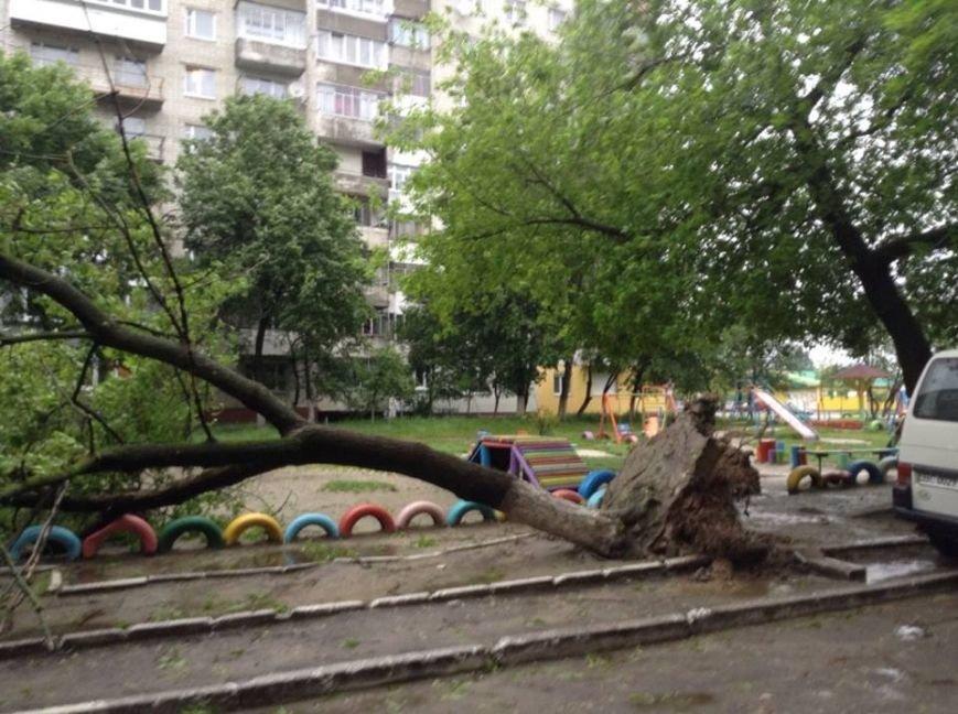 Погода наробила лиха: у Львові буря повалила дерево на дитячий майданчик (ФОТО), фото-4
