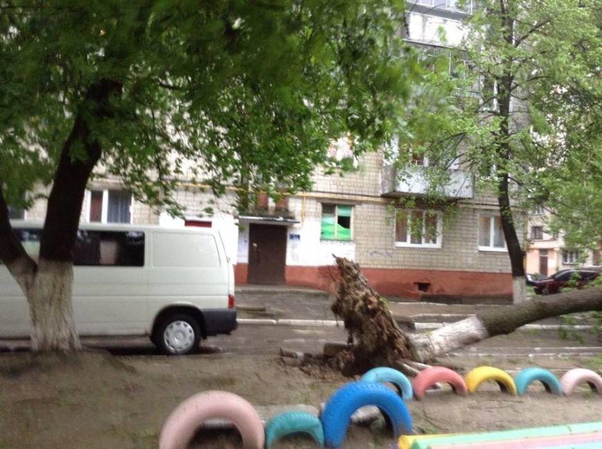 Погода наробила лиха: у Львові буря повалила дерево на дитячий майданчик (ФОТО), фото-2
