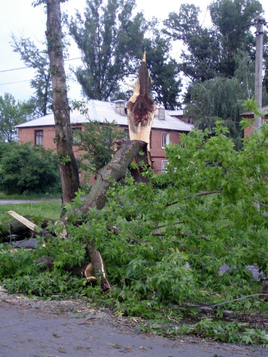 Буря в Полтаві поваляла дерева (ФОТО), фото-4