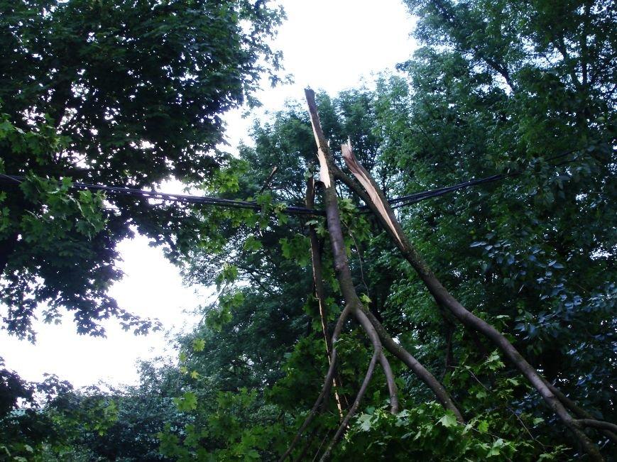 Буря в Полтаві поваляла дерева (ФОТО), фото-5