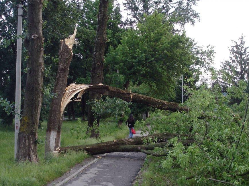 Буря в Полтаві поваляла дерева (ФОТО), фото-2