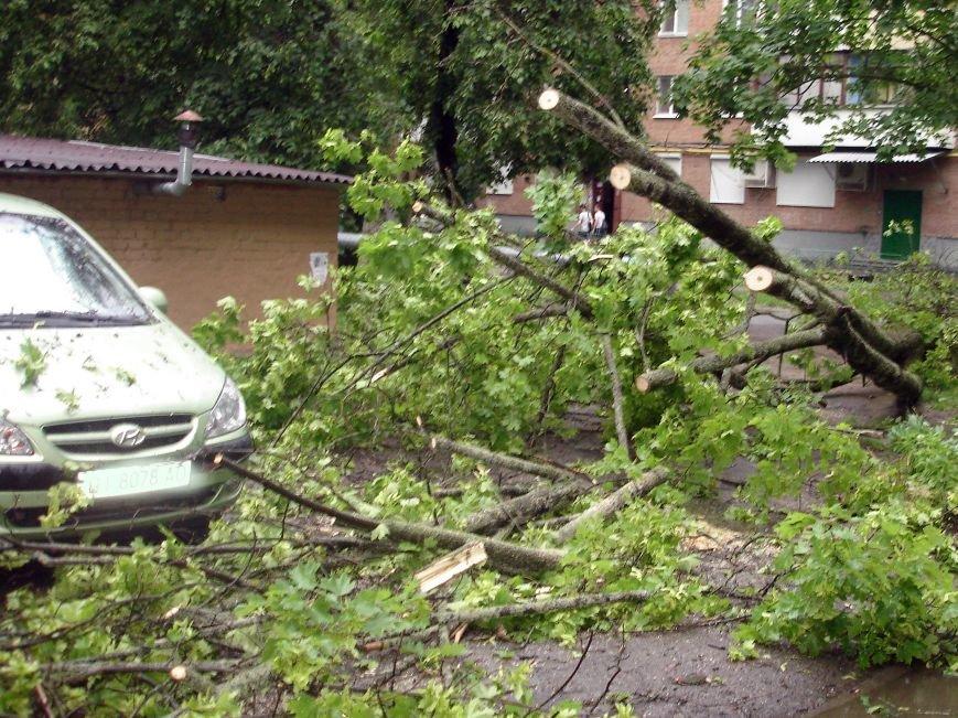 Буря в Полтаві поваляла дерева (ФОТО), фото-1