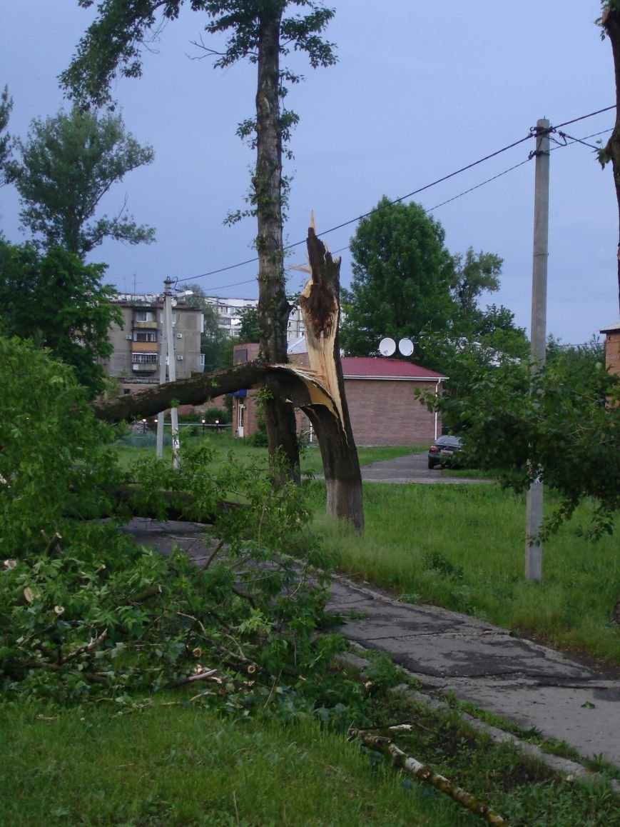 Буря в Полтаві поваляла дерева (ФОТО), фото-6