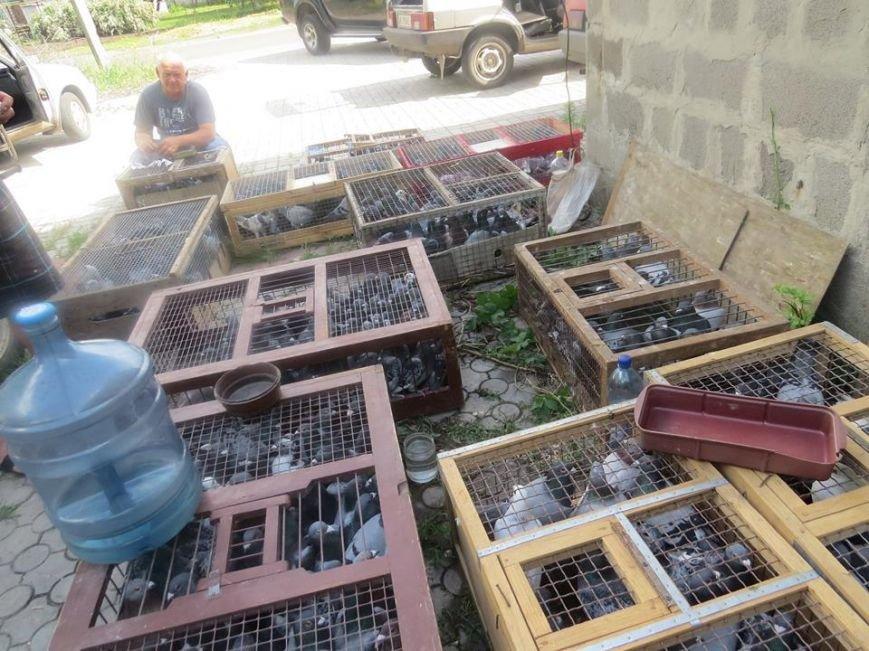 260 км преодолел почтовый голубь из Днепродзержинска, фото-2