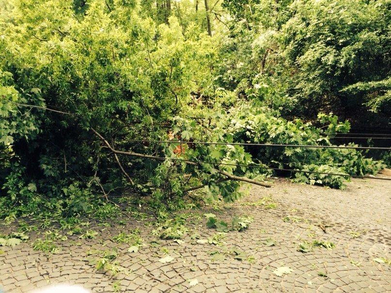 У Львові від негоди дісталось бідній «Мазді». Дерево впало на авто, в якому було дві дівчини (ФОТО), фото-2