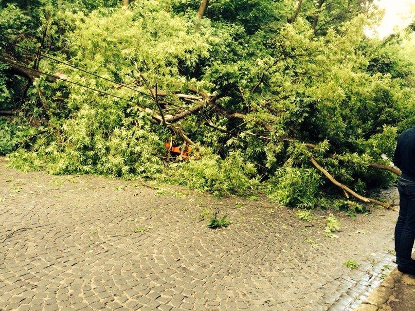 У Львові від негоди дісталось бідній «Мазді». Дерево впало на авто, в якому було дві дівчини (ФОТО), фото-1