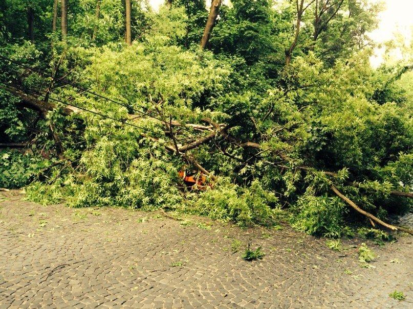 У Львові від негоди дісталось бідній «Мазді». Дерево впало на авто, в якому було дві дівчини (ФОТО), фото-3