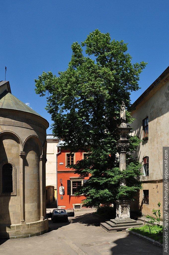 У Фейсбуку вирішують, чи зрізати липу на Вірменський, яка руйнує пам'ятку архітектури (ФОТО), фото-1