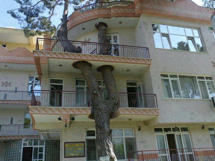 У Фейсбуку вирішують, чи зрізати липу на Вірменський, яка руйнує пам'ятку архітектури (ФОТО), фото-5