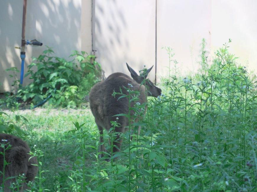 Влюбленные аисты, новорожденные антилопа и кенгуренок: в харьковском зоопарке рассказали о пополнении (ФОТО), фото-2