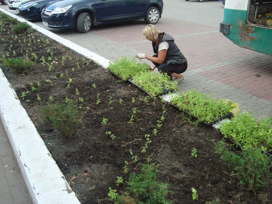 В центре Днепродзержинска латают дороги и сажают петунии, фото-4