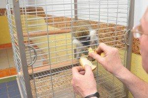 У Львові експлуататору, який заробляв на тваринах, повернули мавпу (ВІДЕО, ФОТО), фото-1