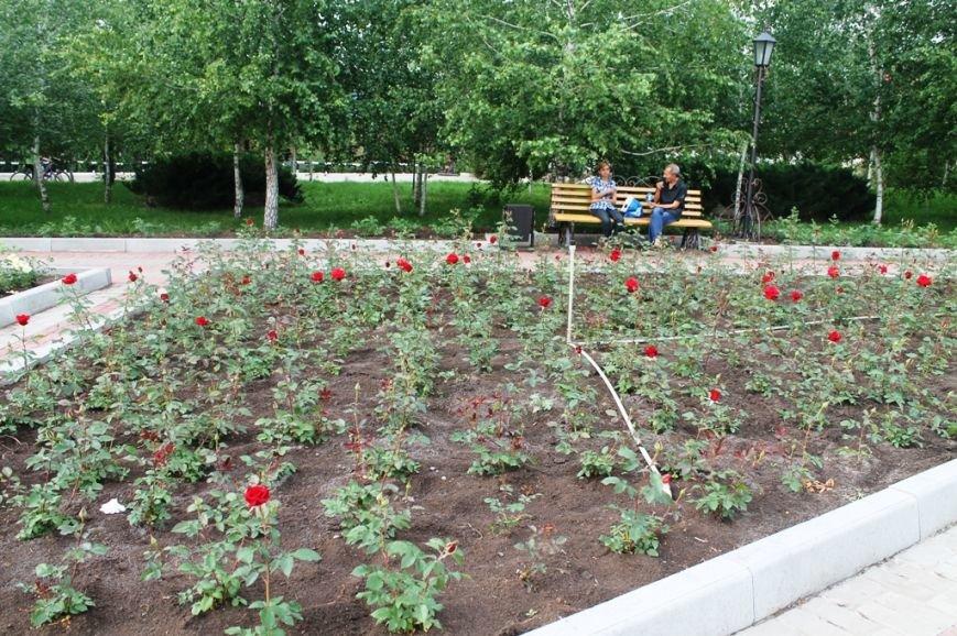 В Артемовске впервые зацвела Аллея роз (ФОТО), фото-10