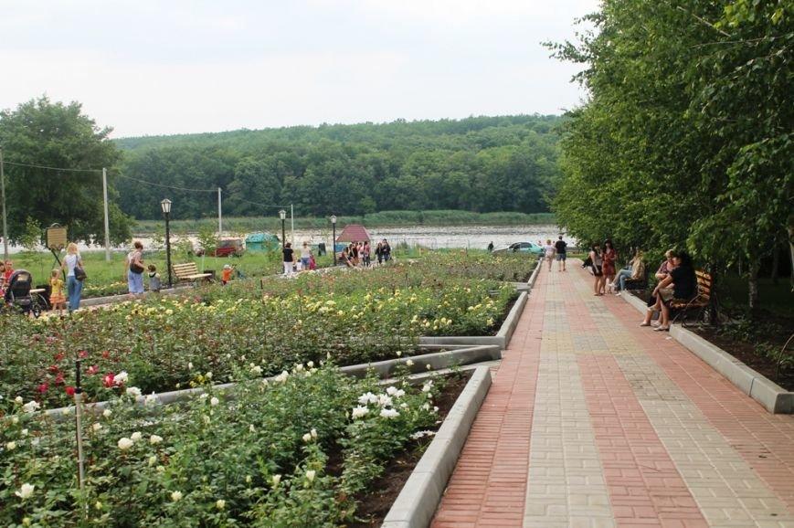 В Артемовске впервые зацвела Аллея роз (ФОТО), фото-3