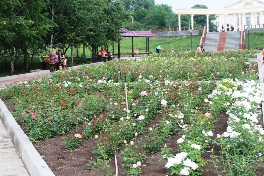 В Артемовске впервые зацвела Аллея роз (ФОТО), фото-9