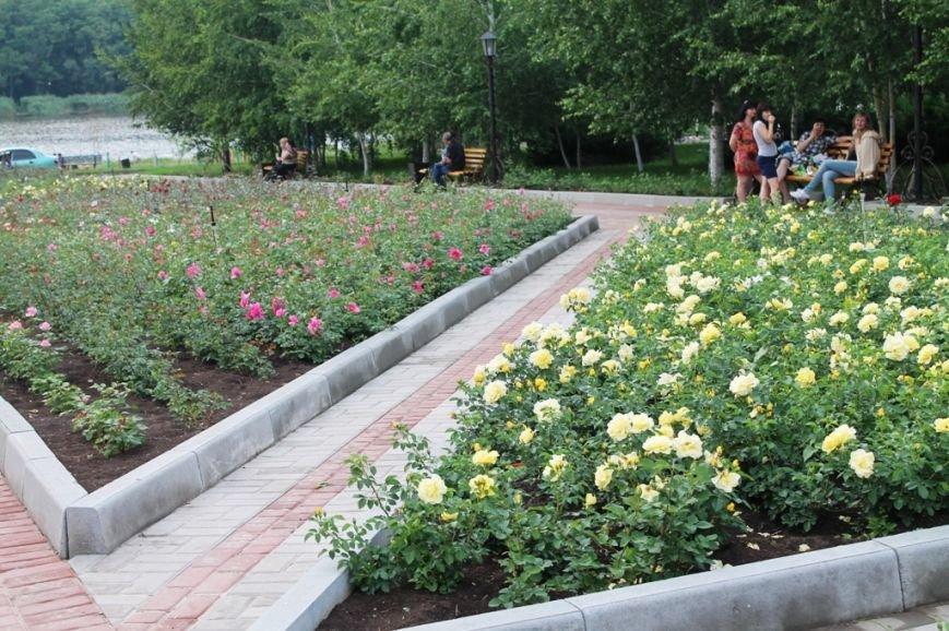 В Артемовске впервые зацвела Аллея роз (ФОТО), фото-6