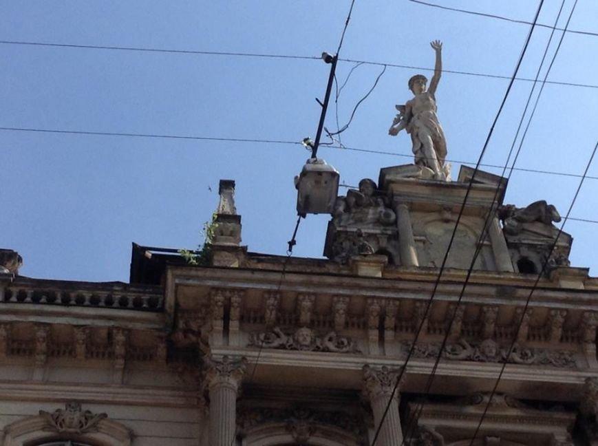У Львові на дахах ростуть дерева. Як із ними бореться Садовий і чиновники (ФОТО), фото-6