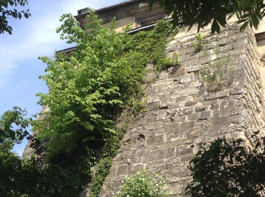У Львові на дахах ростуть дерева. Як із ними бореться Садовий і чиновники (ФОТО), фото-2