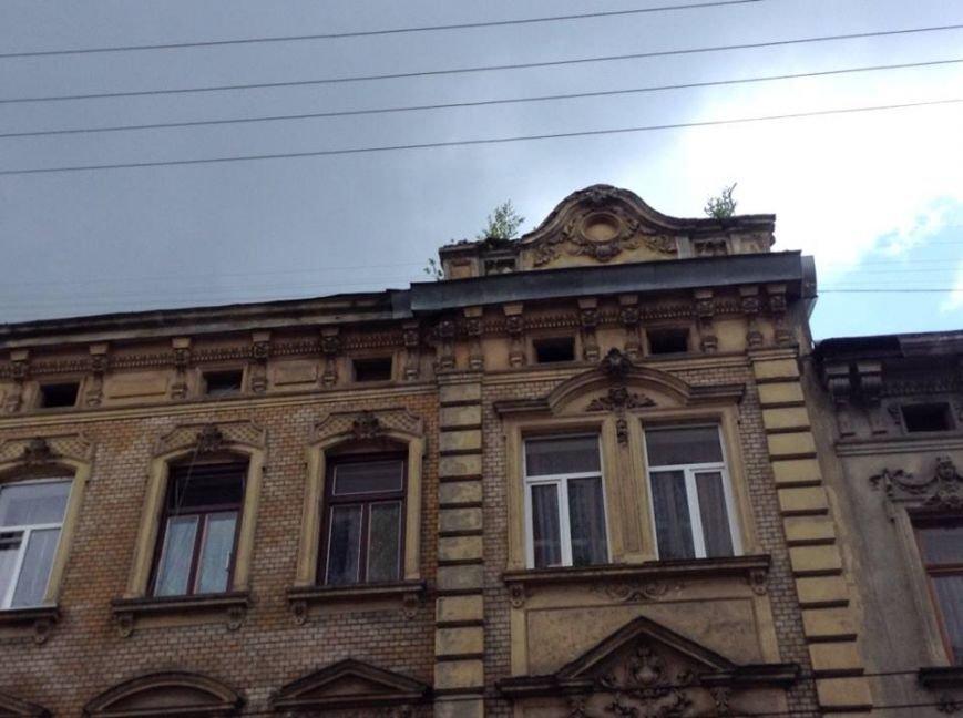 У Львові на дахах ростуть дерева. Як із ними бореться Садовий і чиновники (ФОТО), фото-10
