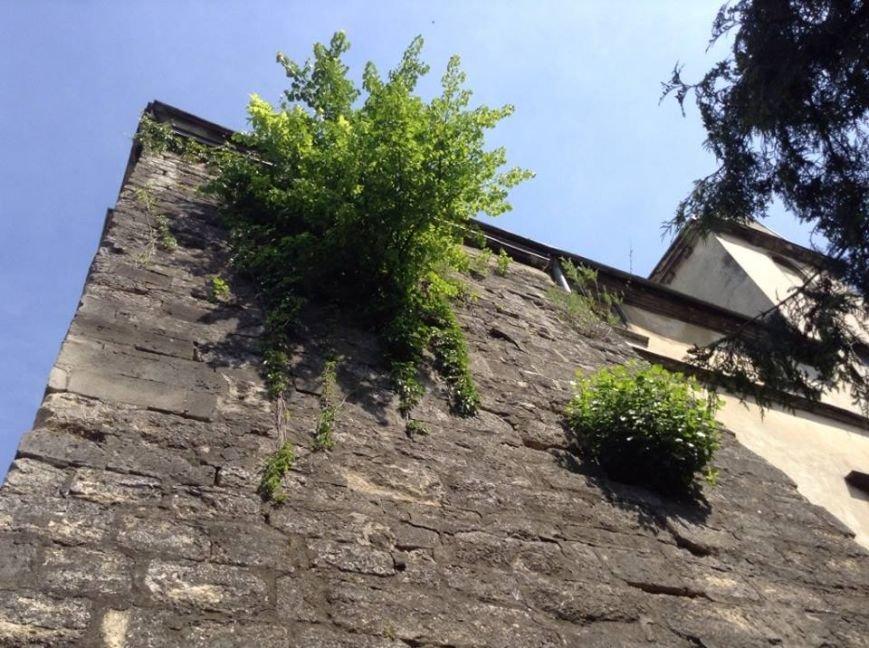 У Львові на дахах ростуть дерева. Як із ними бореться Садовий і чиновники (ФОТО), фото-4