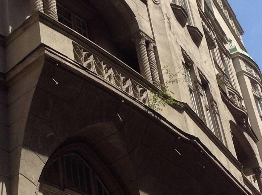 У Львові на дахах ростуть дерева. Як із ними бореться Садовий і чиновники (ФОТО), фото-8