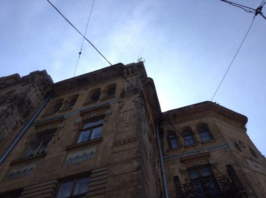 У Львові на дахах ростуть дерева. Як із ними бореться Садовий і чиновники (ФОТО), фото-9