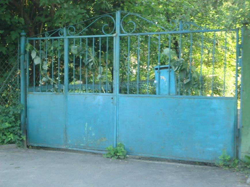 Львів'яни прикрасили свої помешкання і під'їзди зеленню (ФОТО), фото-2