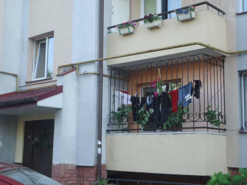 Львів'яни прикрасили свої помешкання і під'їзди зеленню (ФОТО), фото-3
