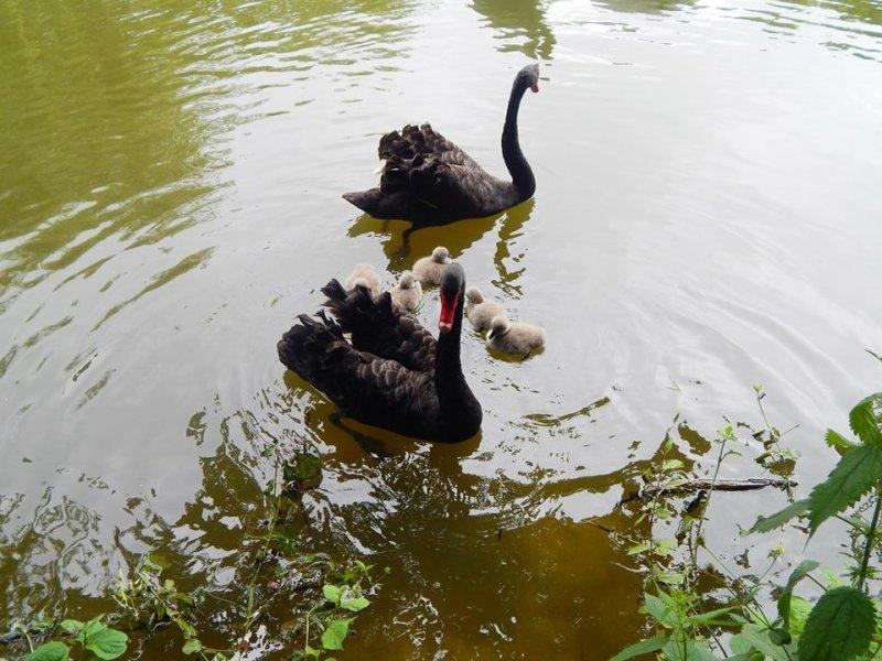 У Луцькому зоопарку знову поповнення, фото-1