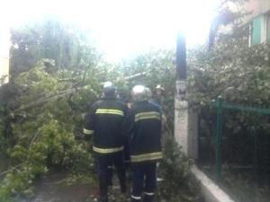 На Львівщині дерево вщент розтрощило автівку (ФОТО), фото-1