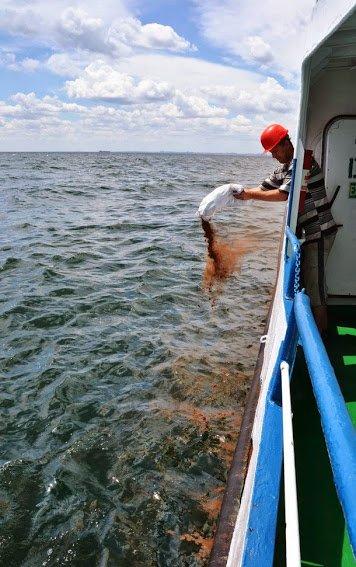 Из затонувшего под Одессой судна сочится нефть (ФОТО), фото-2