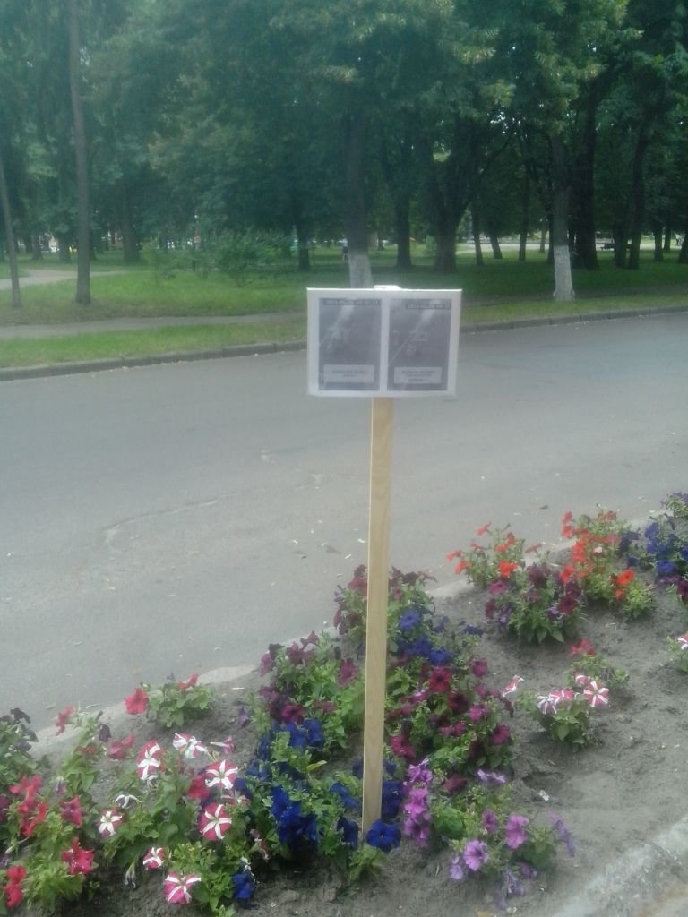 Черниговские клумбы подверглись разграблению, фото-3
