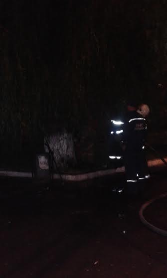 В  Мариуполе пожарные тушили задымившееся дерево (Фотофакт), фото-2