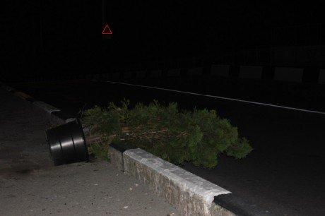 У Тернополі п`яні молодики розкидають туї, які використовують для мобільного озелення (фото), фото-1