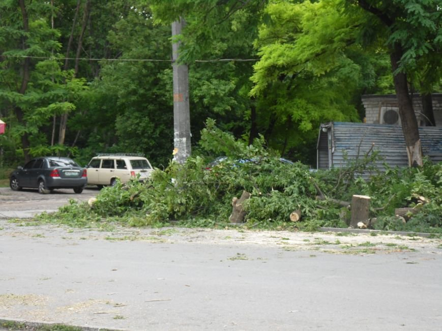 В Днепропетровске на одном из жилых массивов обрушилось дерево (ФОТО), фото-2