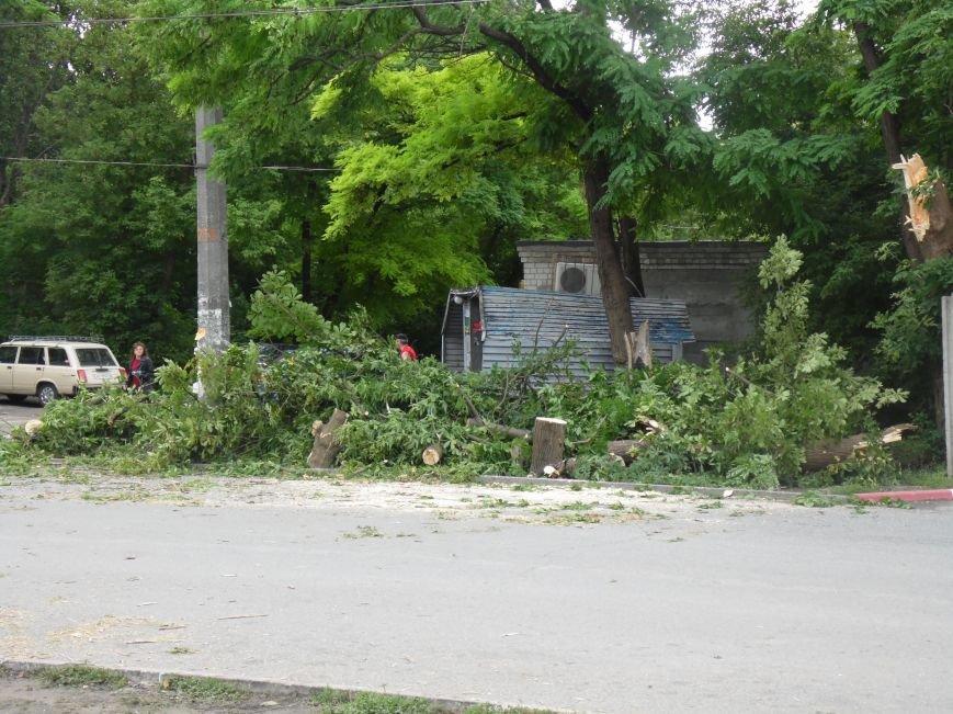 В Днепропетровске на одном из жилых массивов обрушилось дерево (ФОТО), фото-4