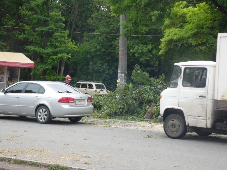 В Днепропетровске на одном из жилых массивов обрушилось дерево (ФОТО), фото-1