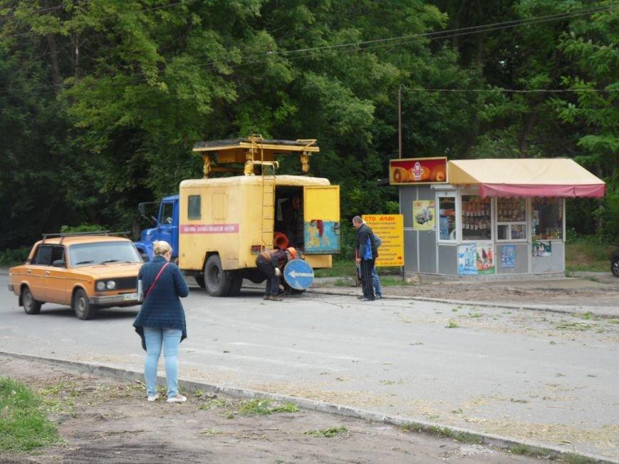 В Днепропетровске на одном из жилых массивов обрушилось дерево (ФОТО), фото-3