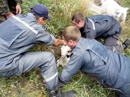 Спасатели на Луганщине освободили из люка козленка (ФОТО), фото-3