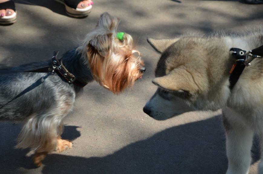 В Мариуполь на выставку собак привезли необычайно редкую породу – тазу (ФОТОРЕПОРТАЖ), фото-4