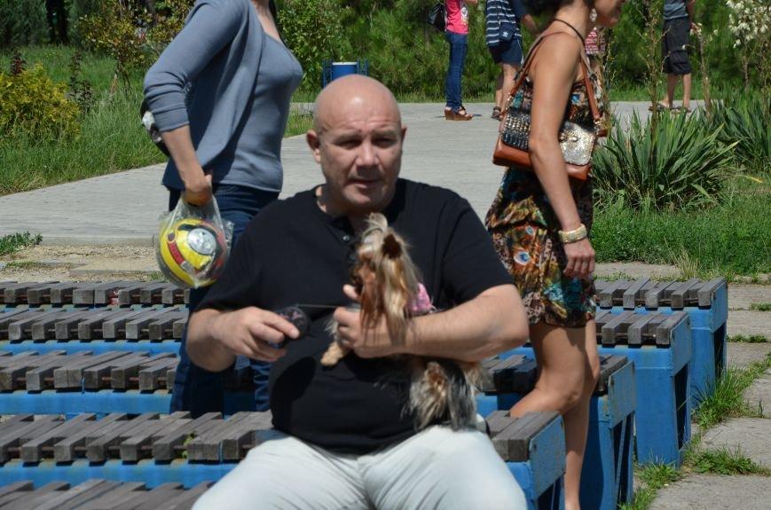 В Мариуполь на выставку собак привезли необычайно редкую породу – тазу (ФОТОРЕПОРТАЖ), фото-31