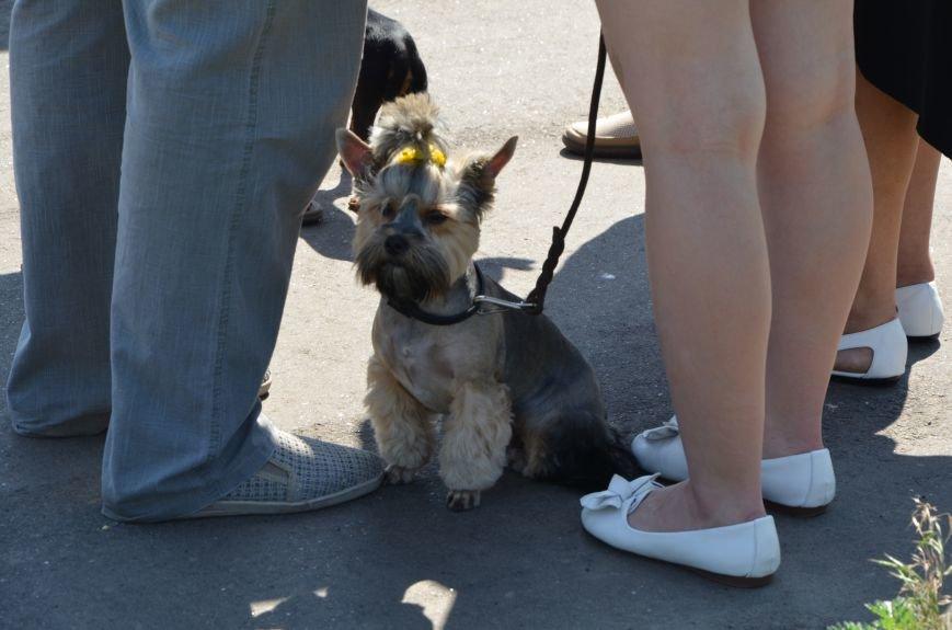 В Мариуполь на выставку собак привезли необычайно редкую породу – тазу (ФОТОРЕПОРТАЖ), фото-1