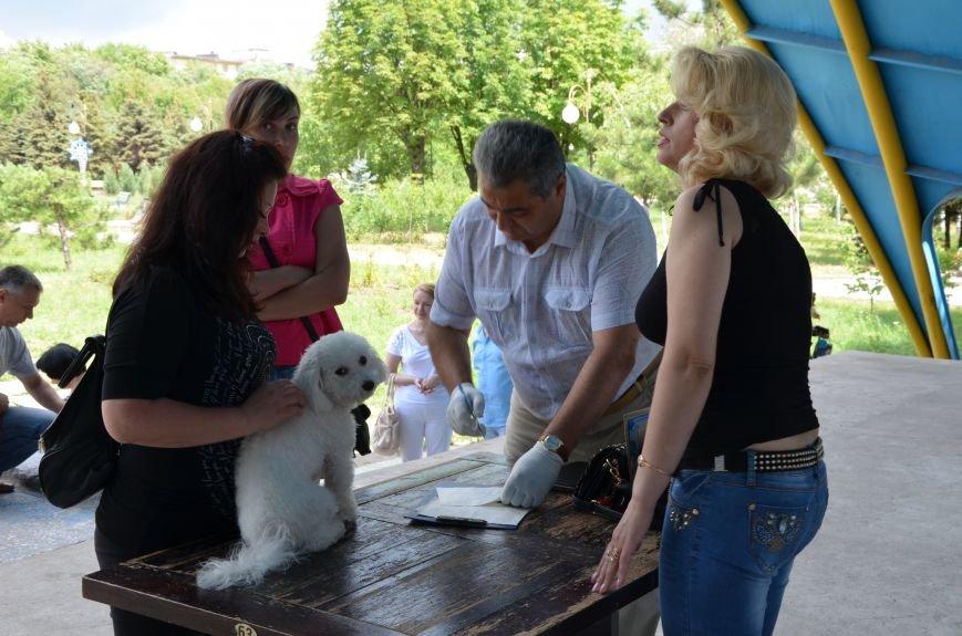 В Мариуполь на выставку собак привезли необычайно редкую породу – тазу (ФОТОРЕПОРТАЖ), фото-36