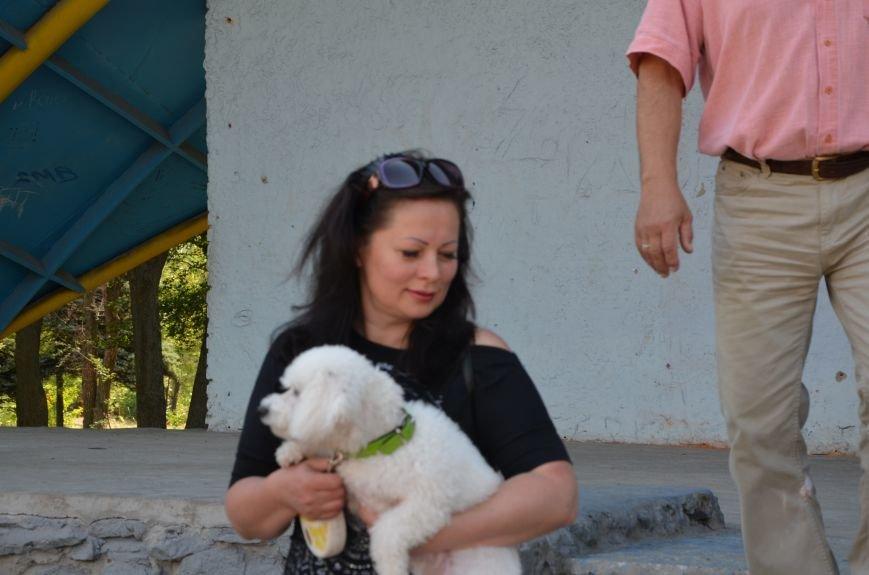В Мариуполь на выставку собак привезли необычайно редкую породу – тазу (ФОТОРЕПОРТАЖ), фото-37