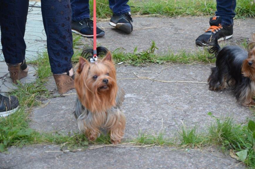 В Мариуполь на выставку собак привезли необычайно редкую породу – тазу (ФОТОРЕПОРТАЖ), фото-35